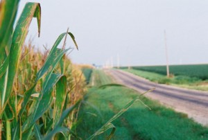 Canon Sure Shot 120, Corn with Bokeh