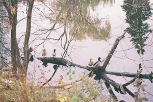Nikon N6006 - Ducks by the Pond, Overexposed